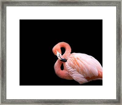 Flamingo 3 Framed Print by Rebecca Cozart
