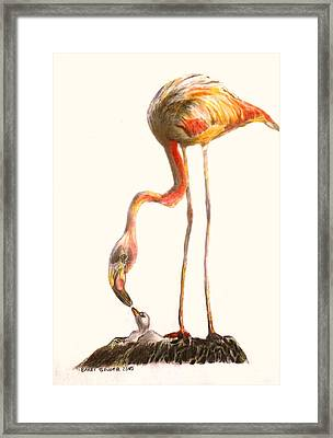 Flamingo Feeding Chick Framed Print by Barrington Binger