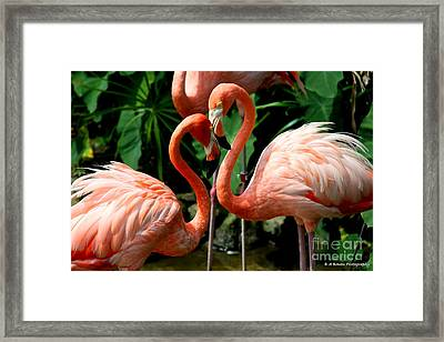 Flamingo Heart Framed Print by Barbara Bowen