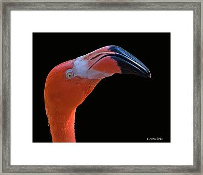 Flamingo Framed Print by Larry Linton