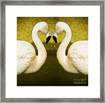 Flamingo Reflection Framed Print by Avalon Fine Art Photography