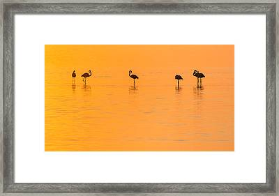Flamingo Sunset - Silhouette Photograph Framed Print by Duane Miller
