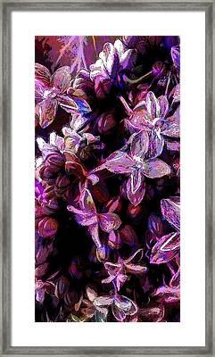 Flash Of Floral Framed Print by Jo-Anne Gazo-McKim