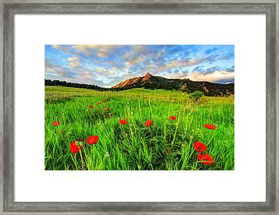 Flatiron Poppies Framed Print by Scott Mahon