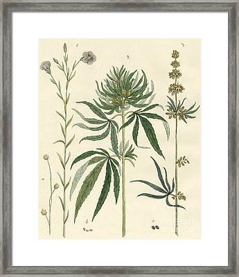 Flax And Hemp Framed Print by German School