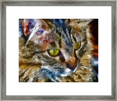 Fletcher Kitty Framed Print by Marilyn Sholin