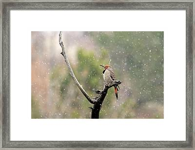 Flicker In The Rain Framed Print by Donna Kennedy