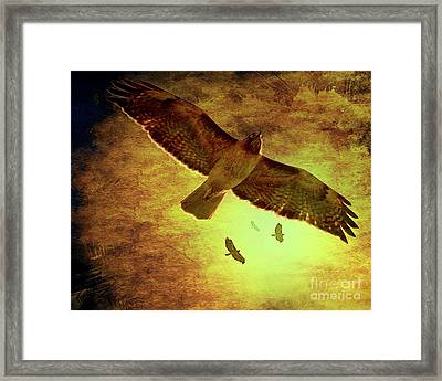 Flight Of The Golden Hawks . 7d5066 Framed Print by Wingsdomain Art and Photography