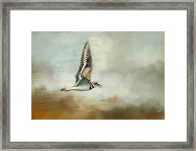 Flight Of The Killdeer Framed Print by Jai Johnson