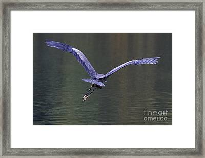 Flight Framed Print by Sean Griffin