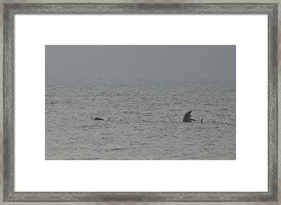 Flipper Framed Print by Bill Cannon