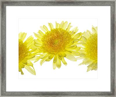 Floaters Framed Print by Rebecca Cozart
