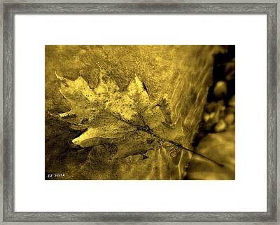 Floating Foliage Framed Print by Ed Smith
