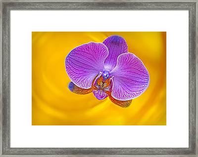 Floating Orchid Framed Print by Susan Candelario