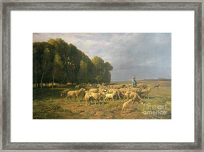 Flock Of Sheep In A Landscape Framed Print by Charles Emile Jacque