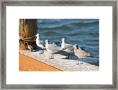Flock Together Framed Print by Tammy Mutka