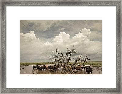 Flooded Pastures Framed Print by Chris Harris