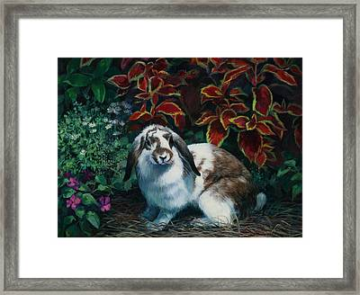 Floppy Ears Framed Print by Laurie Hein
