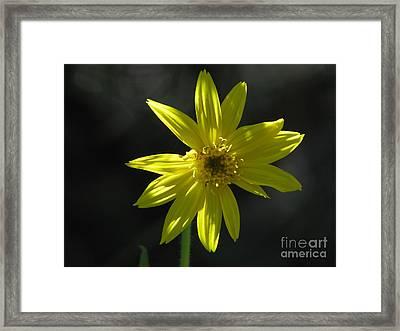 Floral Framed Print by Amanda Barcon