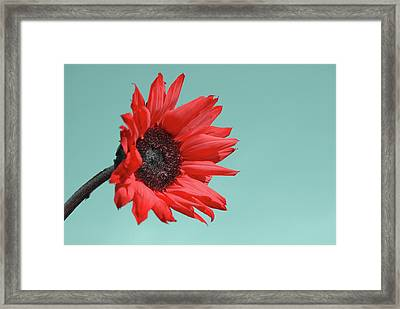 Floral Energy Framed Print by Aimelle