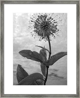 Floral Exam Framed Print by Ross Odom
