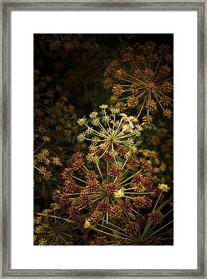 Floral Fireworks #02 Framed Print by Loriental Photography