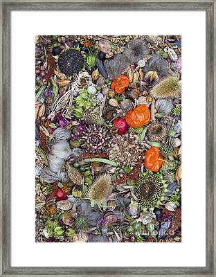 Floral Seed Pods Framed Print by Tim Gainey