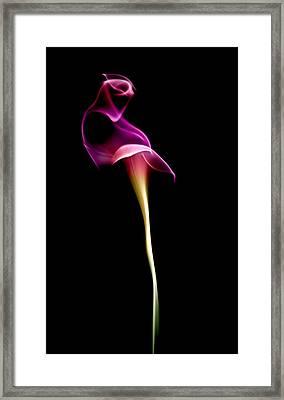 Floral Wisp Framed Print by Maggie Terlecki