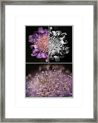 Floralicious  Framed Print by Bonnie Bruno