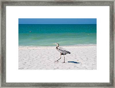 Florida Sanibel Island Summer Vacation Beach Wildlife Framed Print by ELITE IMAGE photography By Chad McDermott