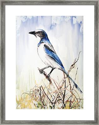 Florida Scrub Jay Framed Print by Anthony Burks Sr