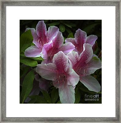 Flower 8-21 Framed Print by Skip Willits
