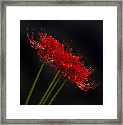 Flower 8-6 Framed Print by Skip Willits