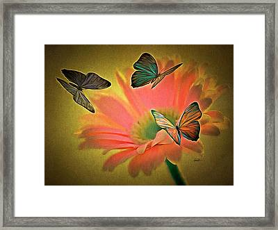 Flower And Butterflies Framed Print by Anthony Caruso