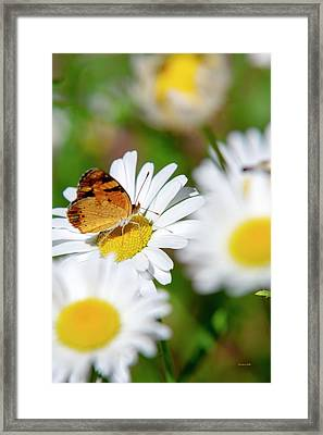 Flower And Butterfly Framed Print by Christina Rollo