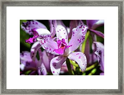 Flower Art - Intimate Orchid 4 - Sharon Cummings Framed Print by Sharon Cummings