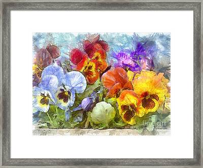 Flower Box Full Of Pansy Pencil Framed Print by Edward Fielding