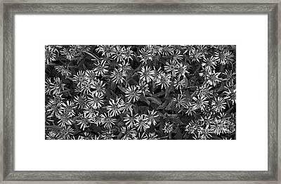 Flower Carpet Framed Print by Priska Wettstein