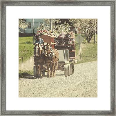 Flower Delivery Framed Print by Cassie Peters