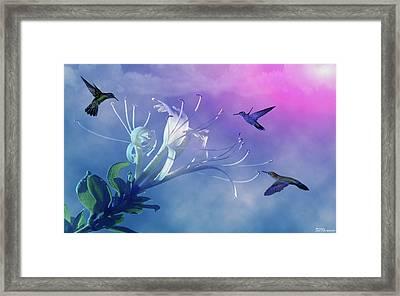 Flower  Framed Print by Evelyn Patrick