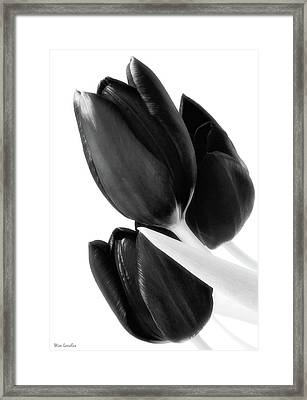 Flower Fashion Framed Print by Wim Lanclus