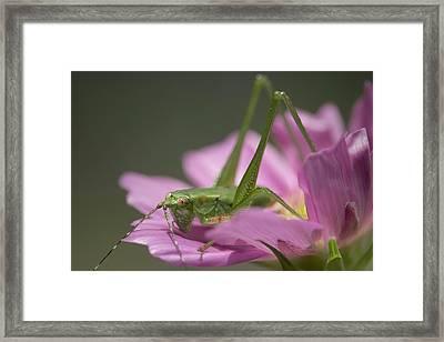 Flower Hopper Framed Print by Michael Eingle