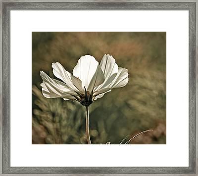 Flower In The Sun Framed Print by Maggie Terlecki