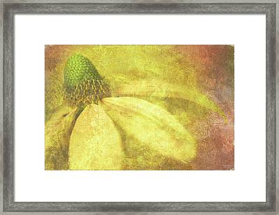 Flower Magnifico Framed Print by JQ Licensing