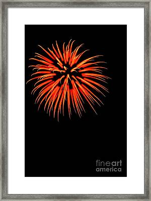 Flower No 6 4976 Framed Print by Ken DePue