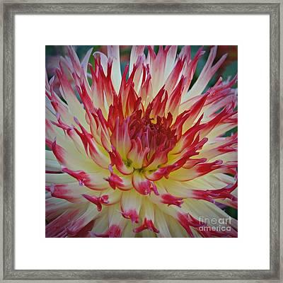 Flower On Fire Framed Print by Patricia Strand