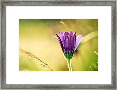 Flower On Summer Meadow Framed Print by Nailia Schwarz