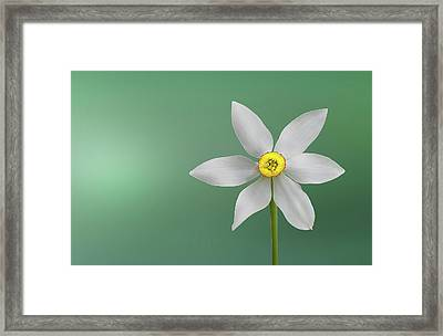 Flower Paradise Framed Print by Bess Hamiti