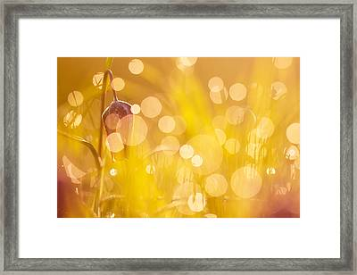 Flower Party II Framed Print by Roeselien Raimond