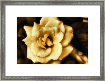 Flower Framed Print by Gulf Island Photography and Images